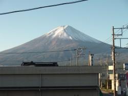 初冠雪1.jpg