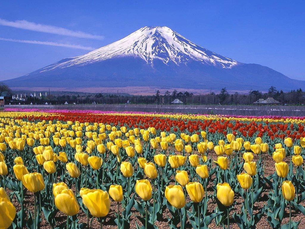 春の富士山.jpg