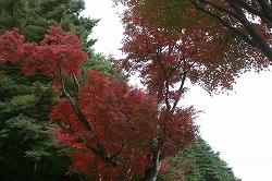 紅葉  8.jpg
