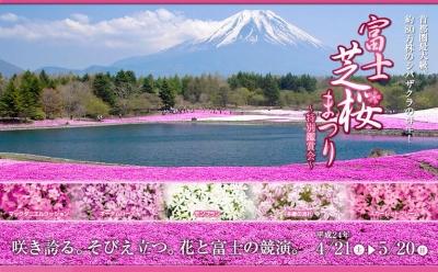 芝桜panfu.jpg