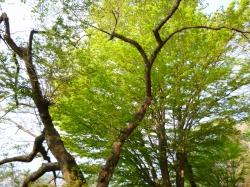 2012050605.jpg