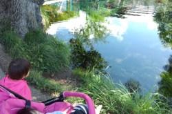 地元がオススメする河口湖の観光スポットとグルメスポット
